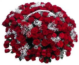 150 red roses basket