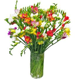 Freesias